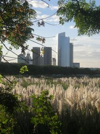 Costanera wildlife in view of the city