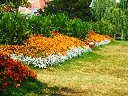 45 Flowers