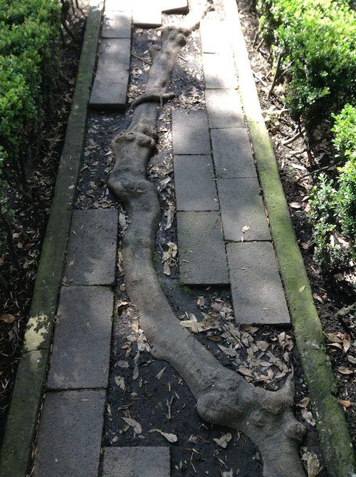 4e Pathway
