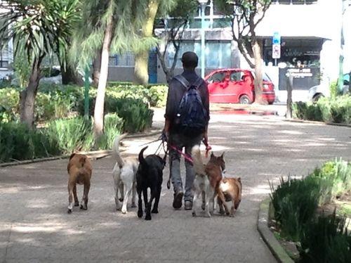 5b Dogs