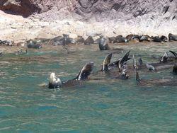 6 Sea lions